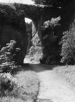 Belsay Quarry Garden. Photo Northumberland County Council, 1956.