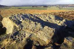 Cup and ring marked stone at Lordenshaws. Photo by Northumberland County Council.