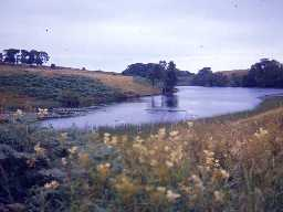 One of the Rothley lakes. Photo by Harry Rowland.