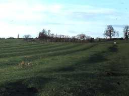 Ridge and furrow at Kirkley. Photo by Harry Rowland.