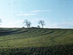 Fields of ridge and furrow, west of Kirkwhelpington.
