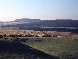 View over Eglingham parish towards Old Bewick (Bewick parish). Photograph by Harry Rowland.
