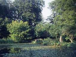 Pond at Wallington. Photo by Harry Rowland.