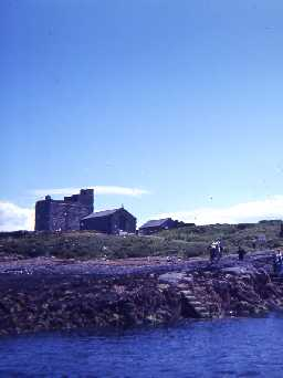 Inner Farne Island. Photo by Harry Rowland.