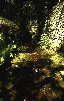 Watercourse, Allenheads.