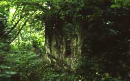 Remains of old Bridge on west bank of Devil's Water, Dilston.