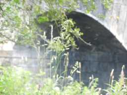 Bridge arch 22/07/16